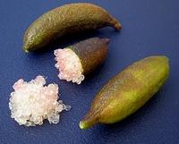 Citrus Australasica, Citron caviar