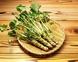 Wasabi green